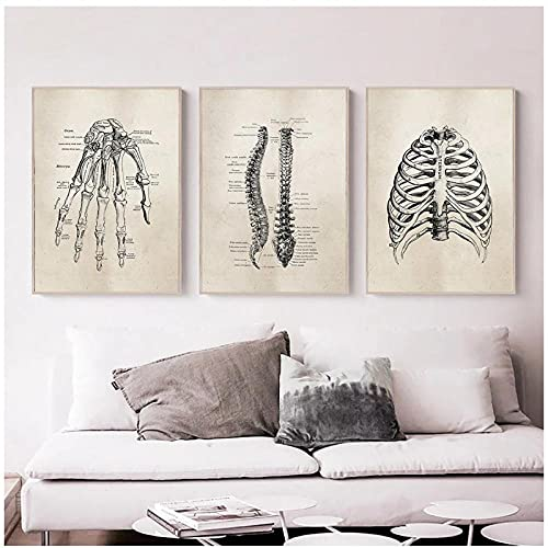 DLFALG Pintura vintage de anatomía humana, carteles de lienzo de anatomía médica, imágenes artísticas de pared, impresión, médico, clínica, oficina, decoración del hogar-40x50cmx3 sin marco