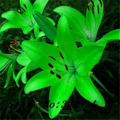 Promotion Hot! 100pcs parfum Lily Graines fleurs Germination 99% creepers bonsaï jardin bricolage fournitures pots planteurs