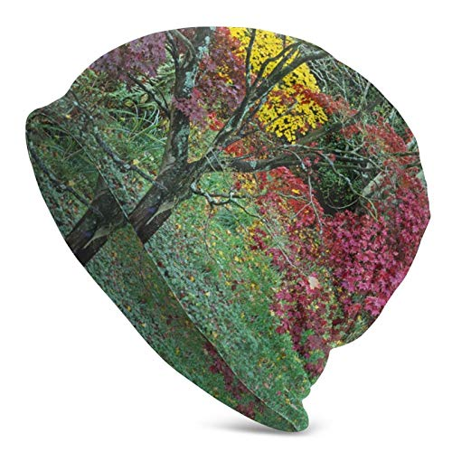 GgDupp Beanie Acer Trees in Autumn colours Men Women Unisex Soft Cuffed Plain Skull Knit Hat Cap
