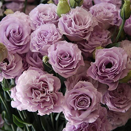 Promworld Frühling Blumen mehrjährig winterhart,Chrysantheme-Mit Becken_Eustoma 200 Tabletten,Samen fü Blumen