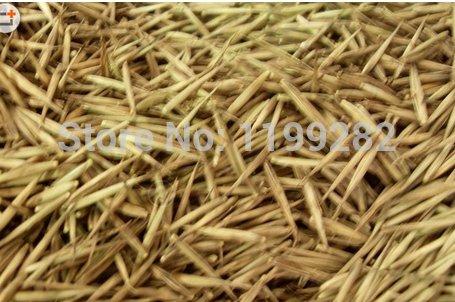 20 GRAINES ~ 100% Haute Qualité frais Lucky Bamboo Seeds * Livraison gratuite