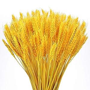 XHXSTORE 100 Uds Trigo seco Flores secas Naturales para florero Mesa de hogar balcón Boda florero Iglesia Chimenea