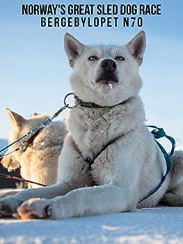 Norway s Great Sled Dog Race  Bergebylopet N70