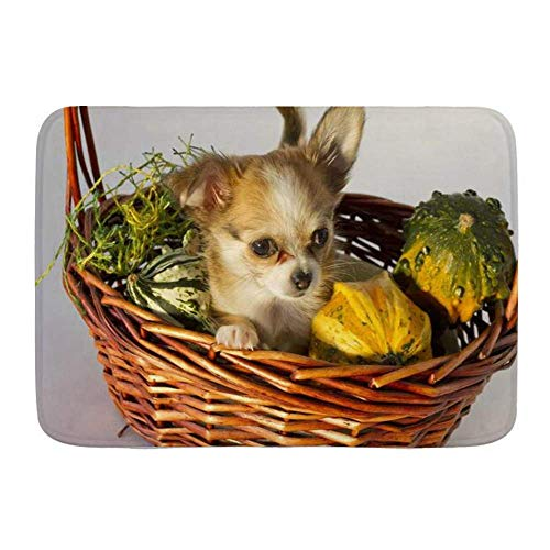 kThrones Bath Mat Rug,Chihuahua Puppy in Wicker Funny Basket Ornamental Animals Wildlife Holidays,Plush Bathroom Decor Mats with Non Slip Backing(80x60cm)