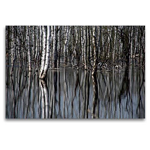 CALVENDO Premium Textil-Leinwand 120 x 80 cm Quer-Format Birkenwald, Leinwanddruck von GUGIGEI