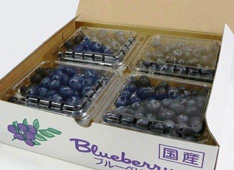 高級生ブルーベリー1kg 有機EM栽培 贈答 無農薬 生食 新鮮 信州伊那産