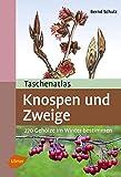 Taschenatlas Knospen und Zweige: 270 Gehölze im Winter bestimmen (Taschenatlanten)