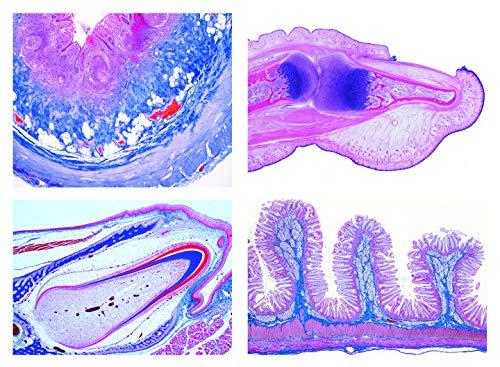 Mikropräparat Serie - Histologie des Menschen II