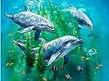 3D LiveLife Lenticular Cuadros Decoración - Delfín arrecife de Deluxebase. Poster 3D sin marco del océano. Obra de arte original con licencia del reconocido artista, Tami Alba