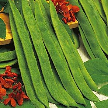 Shop Meeko Kings Seeds - Beans - Runner Bean Butler - 45 Samen