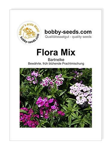Flora, Bartnelke frühe Mischung von...
