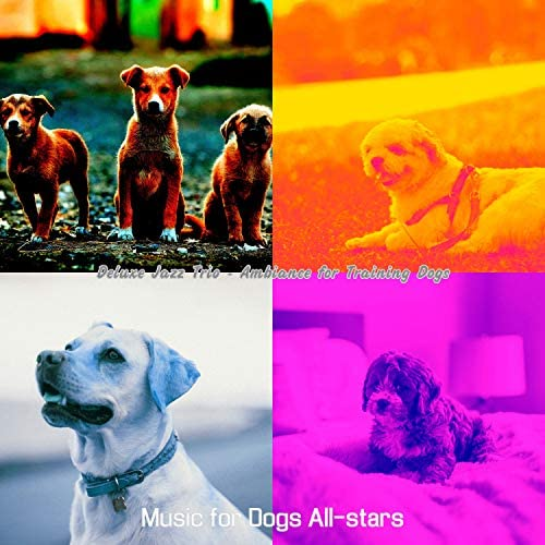 Music for Dogs All-stars