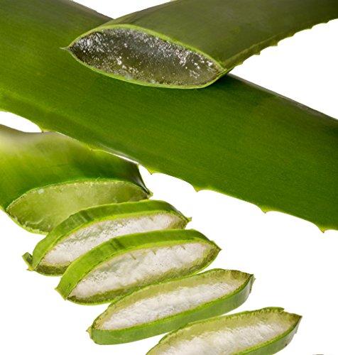 Aloe Vera Linné Blätter Bio (2 Stück à 500 g)