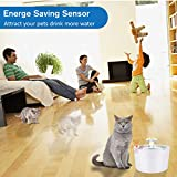 Zoom IMG-1 coquimbo fontanella per gatti cani