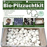 Bio Champignons einfach selber züchten als Komplettset im Pilzzuchtkarton (weisser Champignon)