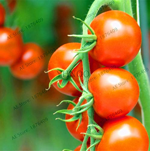 Bloom Green Co. Perte de promotion! 100pcs / sac flores tomate cerise. Rare Balcon potager fruits bio Bonsai plantes en pot (rouge, jaune) Pour: 8