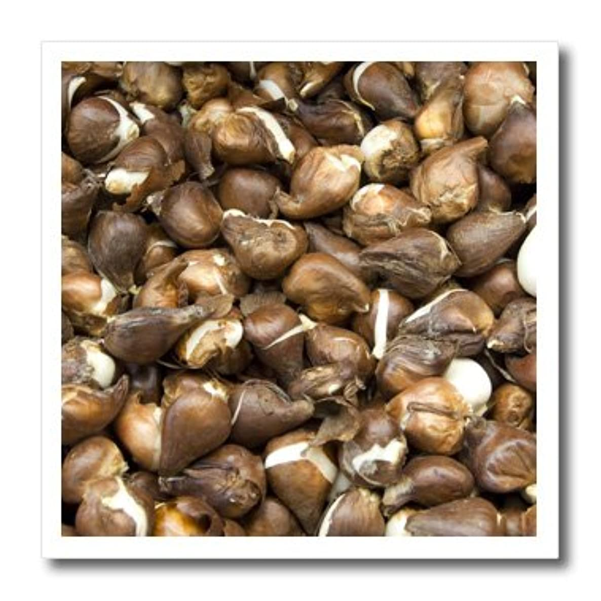 3dRose ht_82274_1 Netherlands, Amsterdam, Market Tulip Bulbs-Cindy Miller Hopkins-Iron on Heat Transfer for Material, 8 by 8-Inch, White