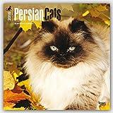 Persian Cats 2016 - Perserkatzen - 18-Monatskalender: Original BrownTrout-Kalender [Mehrsprachig] [Kalender] (Wall-Kalender)