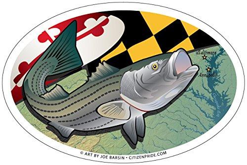 Citizen Pride Maryland Rockfish Oval Magnet, 6 x 4 inches - Euro Car Fridge Locker Vinyl Magnet