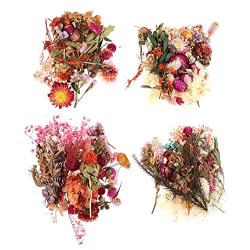 Artibetter 4Pcs Vraies Fleurs Séchées Naturelles Mélangées Fleurs Colorées Herbes de Fleurs Séchées pour Savon Bougie Scrapbooking Bricolage Résine Nail Art Faisant de L'artisanat