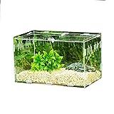 windyday Transparente Terrarium Transportbox 25 X 15 X 15 cm Glasterrarium Belüftung Reptielien Terrarium Zubehör Reptilienzuchtbox Acryl Schieberzucht Box