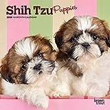 Shih Tzu Puppies 2020 Calendar