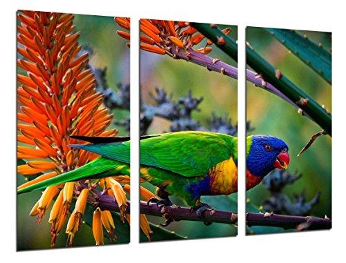 Cuadro Fotográfico Loro Caribe Exotico, Naturaleza Tamaño total: 97 x 62 cm XXL
