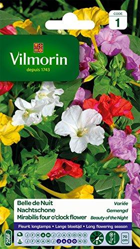 Vilmorin 5165541 Belle de nuit variée, Multicolore, 90 x 2 x 160 cm