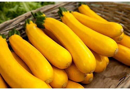 5 graines semences courgette jaune d'italie courge comestible fruit legume potager