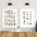 Cuadro de flores silvestres Pintura en lienzo Planta Flor Especie Botánico Cartel educativo Impresión Imagen de pared Habitación de niños Decoración de arte de pared 30 * 40 cm * 3