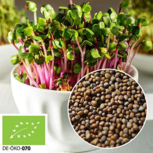 500g Bio Keimsprossen Daikon-Rettich Samen für die Sprossenanzucht Sprossen aus Italien | 0,5 kg | Superfood | Rettich Keimsprossen | naturbelassen | Premium | kompostierbare Verpackung | STAYUNG