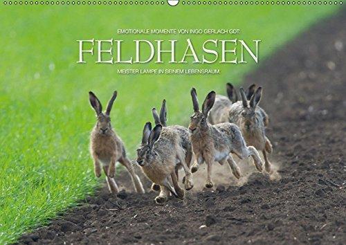 Emotionale Momente: Feldhasen / CH-Version (Wandkalender 2018 DIN A2 quer): Meister Lampe in seinem Lebensraum. (Monatskalender, 14 Seiten ) (CALVENDO Tiere)