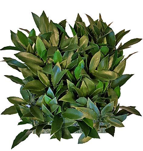 artplants.de Seto de plástico de Laurel/Jardín Vertical FOXI, Zonas resguardadas, 25x25cm - Pared de Plantas Artificiales/Tapiz de Hierba Falsa