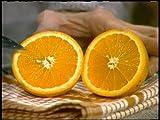 Families (#1551) How People Make Orange Juice