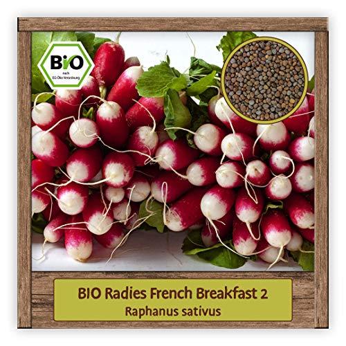 BIO Radieschen Samen Sorte French Breakfast 2 (Raphanus sativus) Gemüsesamen Radies Saatgut