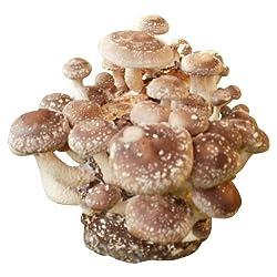 Shiitake Zu Hause Zuchten Pilze Selber Anbauen Gruneliebe