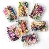 Manyao Natur Wirkliche Getrocknete Blumen Trockene Pflanzen for die Aromatherapie-Harz-Anhänger-Halskette Schmucksachen, die Fertigkeit-Hauptdekor-DIY-Zubehör (Color : Beige, Size : Random 1 Box)