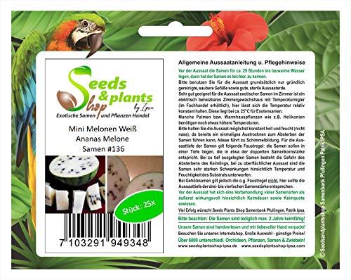 Stk - 25x Mini Weiß Ananas Melone Obst Pflanzen - Samen #136 - Seeds Plants Shop Samenbank Pfullingen Patrik Ipsa