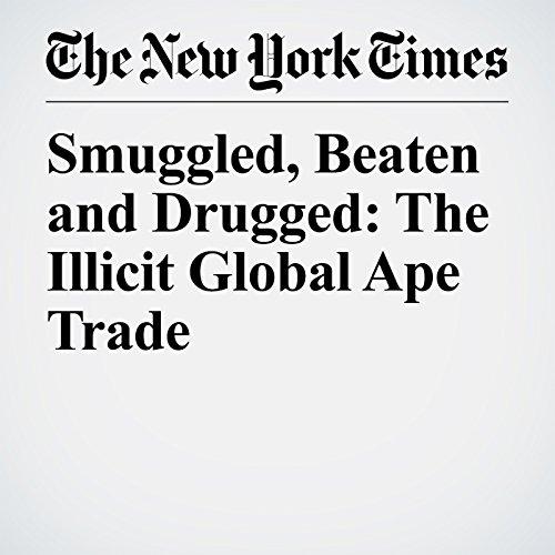 Smuggled, Beaten and Drugged: The Illicit Global Ape Trade copertina