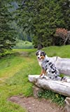 Notebook: Tricolor Border Collie On A Seat In The Swiss Alps 5' x 8' 150 Ruled Pages