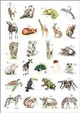 Poster 50 x 70 cm: ABC Tiere von Nadine Conrad -
