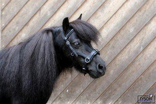Tysons Breeches Kappzaum Kunstleder Nasenteil biegsam ergonomisch MS Shetty Pony Minishetty (Pony)