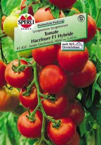 Sperli Tomate Harzfeuer F1