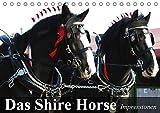 Das Shire Horse. Impressionen (Tischkalender 2019 DIN A5 quer): Die sanften Riesen mit den schönen Puschelfüssen (Geburtstagskalender, 14 Seiten ) (CALVENDO Tiere)