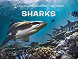 Shark Books Review and Comparison