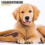 Golden Retriever 9606 Moderner Kalender 2021