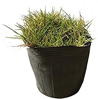 相馬グリーン(Somagreen) 高麗芝 ポット 24ポット 芝生の補修に便利なポット苗