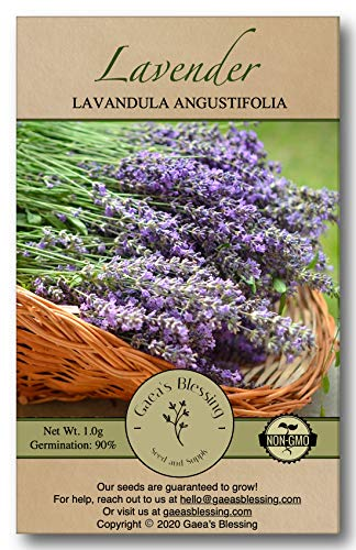 Gaea's Blessing Seeds - English Lavender Seeds - 800+ Heirloom Non-GMO Seeds with Easy to Follow Instructions - Vera True Lavender Heirloom - 91% Germination Rate Net Wt. 1.0g
