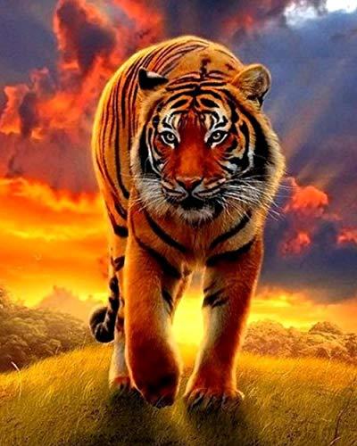 wcyljrb Lienzo De Pintura Tigre Adulto Y Niños Lienzo Lienzo Acrílico Artista De Pared Decoración del Hogar Regalo-16 X 20 Pulgadas (Sin Marco)