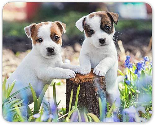 N\A Alfombrilla de ratón, Adorable Alfombrilla de ratón Jack Russell Puppies - Dog Puppy Gift PC Computer